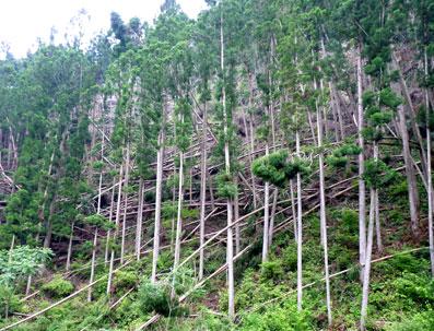 【太陽光発電事業】八ケ岳のいたるところにソーラーパネルが…自然を破壊してまで必要か、再生可能エネルギー★5 [無断転載禁止]©2ch.netYouTube動画>22本 ->画像>20枚